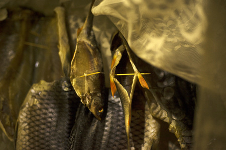 dried fish in the cut,stockfish carp close-up