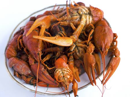 cooked red crayfish in a plate on a white background. European beer delicacy of the arthropod family on a white background close-up