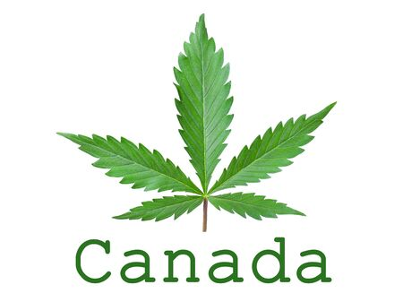 Cannabis legalization symbol in Canada isolated.Green hemp leaf and text with copy space.