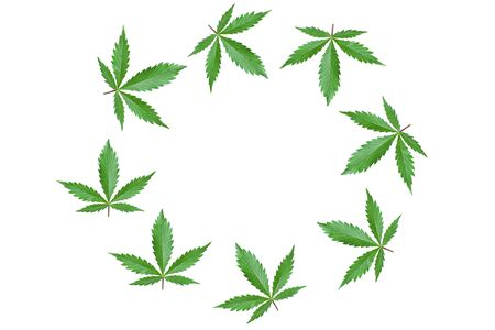 Frame with green cannabis leaves isolated on white background.