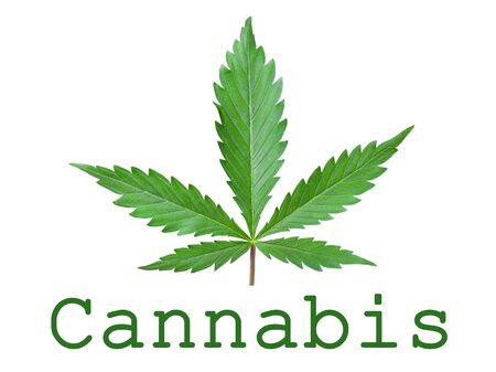 Green leaf cannabis symbol of a medical plant isolated on a white background.
