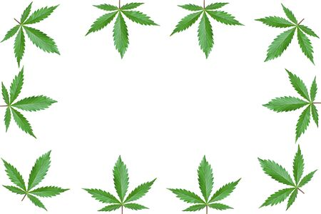 cannabis green leaf frame with copy space on white background isolated pattern.decorative marijuana leaves pattern. Stock Photo