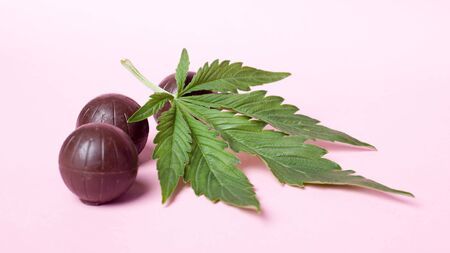chocolate candies and a leaf of marijuana on pink beauty background.sweet candies with the addition of hash oil.
