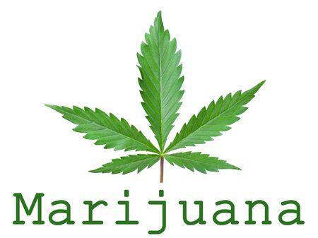 marijuana green leaf concept logo icon on white background.