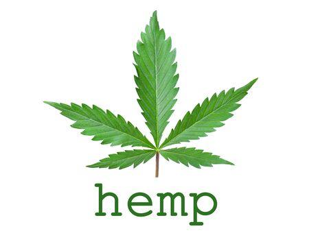 Hemp concept logo icon on white background.