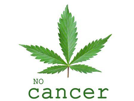 Concept No Cancer green leaf cannabis logo icon on white background. Banco de Imagens