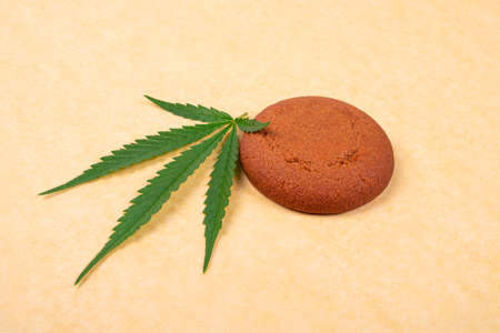 chocolate chip cookie with green leaf of cannabis plant close-up on yellow background, sweets with marijuana.
