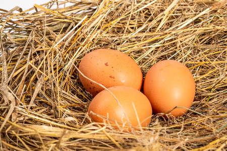 fresh chicken brown eggs in a nest of hay close-up. Foto de archivo