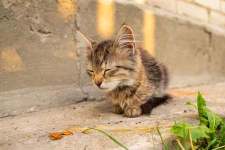 little tabby kitten sitting on the street, pet playing in the yard. 免版税图像