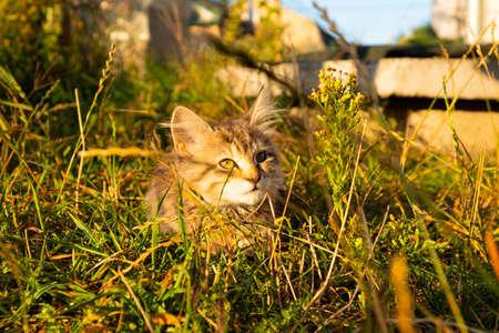 little cat basking in the sun.