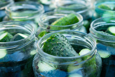 conservation, salting process cucumbers for the winter, jars with gherkins close-up.