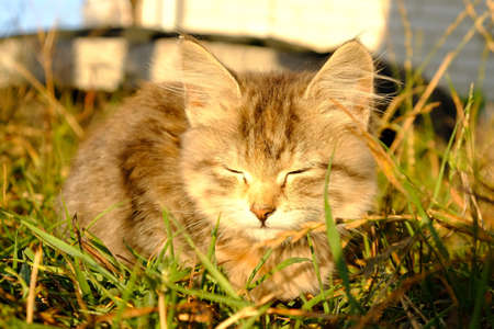 kitten basking in the sun close-up.  免版税图像