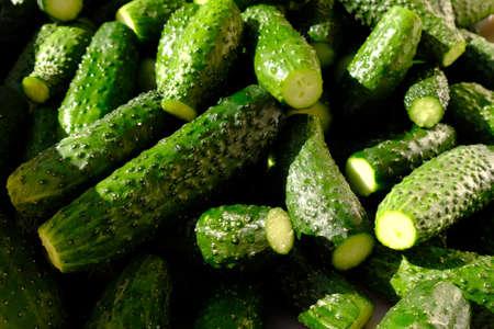 green fresh cucumber, gherkins background hard light.