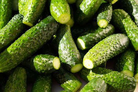 ripe green cucumbers in hard light, gherkins background. 免版税图像