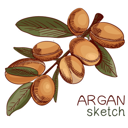 Hand drawn argan oil bottle and branch sketch.
