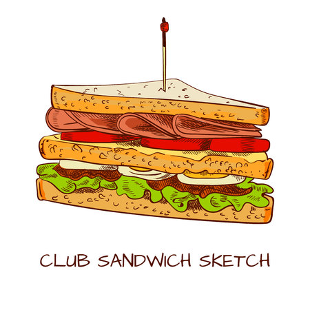 Club sandwich colored sketch. VECTOR sketch. Brown contour lines