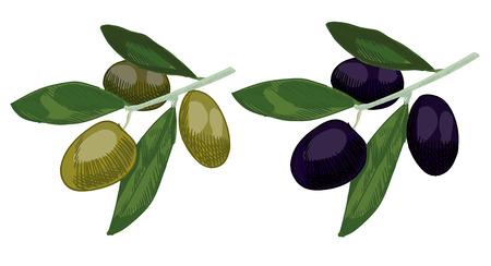 Olive colored sketch.