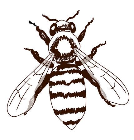 doodled: Hand drawn bee isolated on white illustration. Illustration