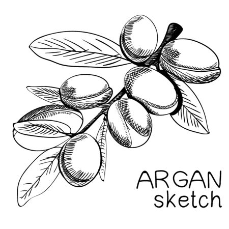 Hand drawn argan branch.