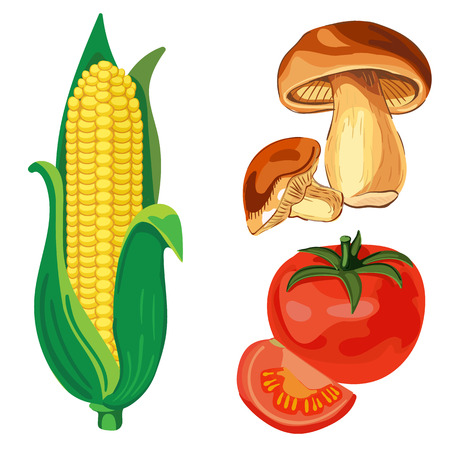 VECTOR set of vegetables. Corn, tomato, mushrooms Illustration