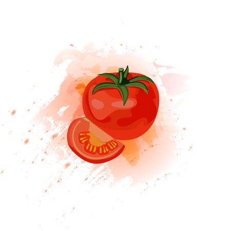 Tomato juice vector illustration, tomato vegetable and slice on juice splash. Illustration