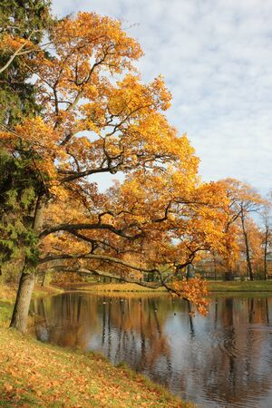 pushkin: The tree with yellow leaves was inclined over a pond in park Stock Photo