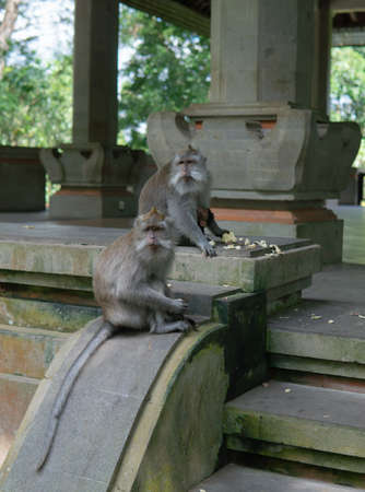 Monkey family sits on step at Monkey Forrest, Ubud, Bali, Indonesia.