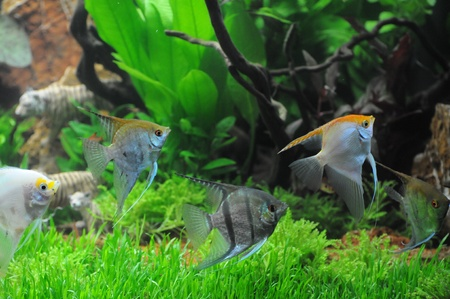 Aquaristic Landscape Stock Photo - 17767196