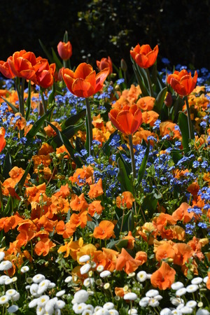 Multicolored flowerbed with vibrant colors. Stock Photo