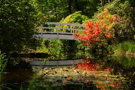 This is the beautiful white Karina bridge in the Seleger marsh parc locally known as Park Seleger Moor in Rifferswil, Switzerland. On the side one can see the beautiful azaleas blooming.