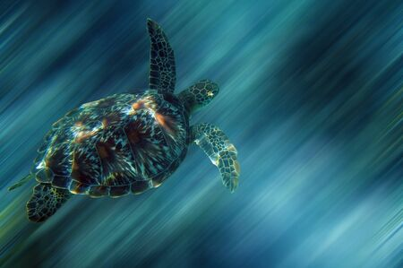 Turtle in China sea around Apo Island - Philippines - With a clipping path photo