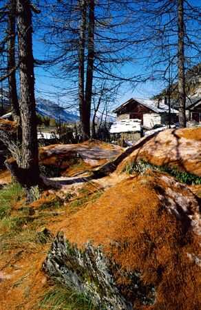 Mountain chalet at Monal in French alps and red thorns larch. photo