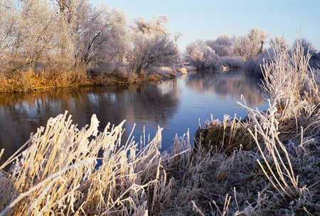 The river Le doubs by winter time on morning. Trees and reeds under frost and freeze