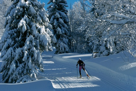 Skier practicing skating on a track in the middle of the snowy forest, in Le Revard, France Stock Photo - 10065643