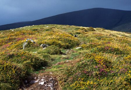 Flower hill illuminated by sun on a dark background of mountains, by stormy weather in Ireland. photo