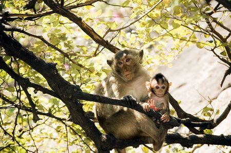 Mom monkey with its baby in her arms at Prachuab Khiri Khan - Thailand photo