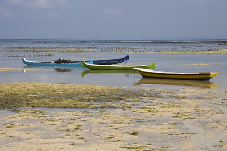 nusa: Seaweed farming on the island of Nusa Lembogan in Indonesia Stock Photo