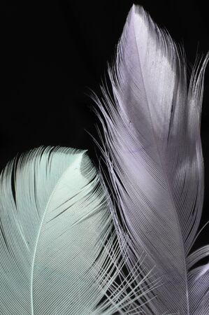 Purple and blue feathers on dark background