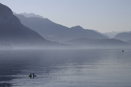 Blue lake of annecy with a parade of couple of grebes and mountains on winter morning photo