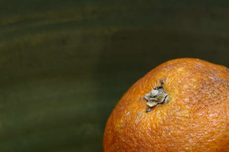 Close up of part of rotten orange on green background photo