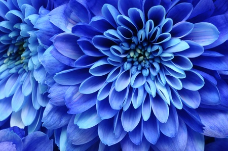 Close up of blue flower   aster with blue petals and yellow heart for background or texture Stock Photo - 13205705