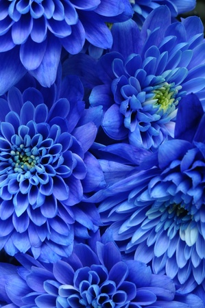 Close up of blue flower   aster with blue petals and yellow heart for background or texture Stock Photo - 13233995