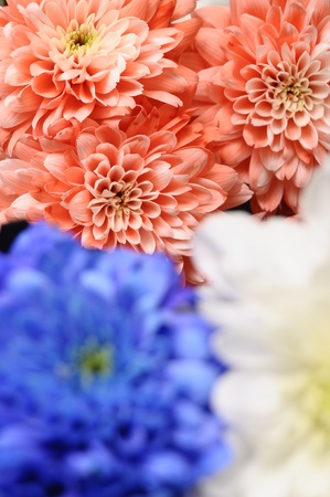 Blue, white, pink flowers asters for background or texture Stock Photo - 13233985