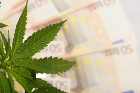 Cannabis plant and lot of euro money from drug photo