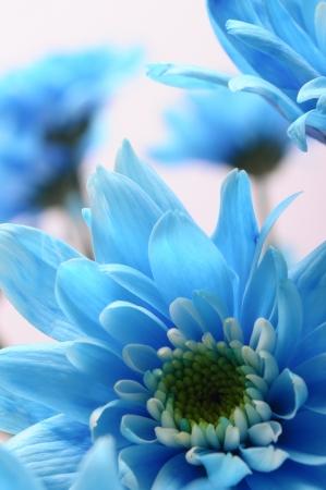 Macro of blue flower on light background photo