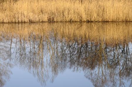 felix: Saint Felix lake and reeds on winter time, Savoy, France Stock Photo