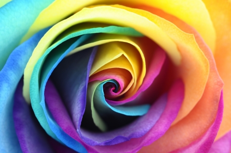 Macro of rainbow rose heart flower and multi colored petals Reklamní fotografie