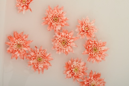 Close up of pink aster flower floating on water photo
