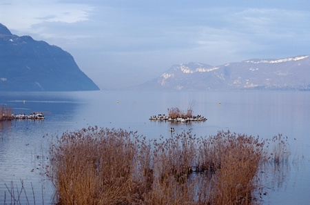 Evening on Bourget lake  largest natural lake in France , near Chambery, with cormorants photo