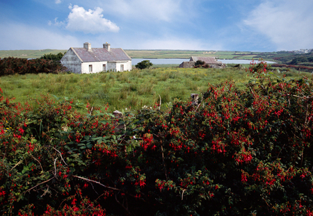 achill: Small white house in Ireland countryside and view of green fields and red flowers, Europe Stock Photo